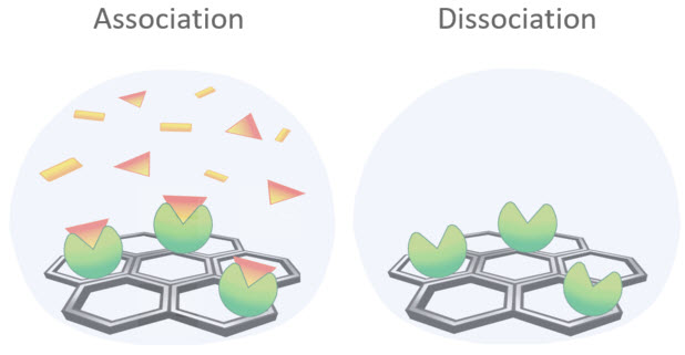 Association and dissociation on the Agile R100 kinetic binding assay